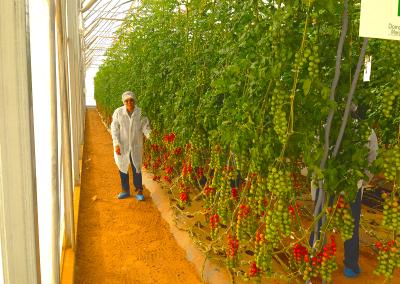rabita-agrotextil-mallas-agricultura-cultivo-fabricantes