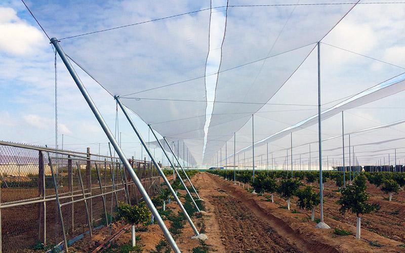 Mallas anti-insectos que mejoran la ventilación en los invernaderos