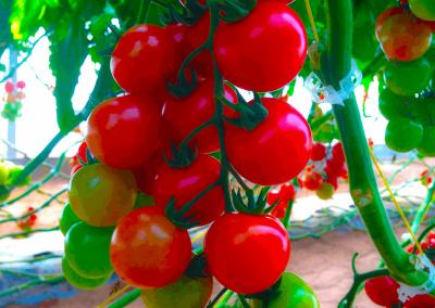 rabita-agrotextil-mallas-agricultura-proteger-cultivo